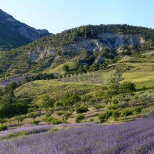 Parc Naturel Régional des Baronnies pour vos vacances