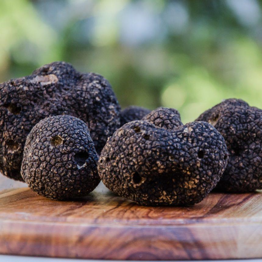 La truffe noire, un produit exceptionnellement gourmet